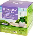 Feromonový lapák na zavíječe zimostrázového Triferon Buxus Box